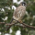 pin feathers, fledging, juvenile