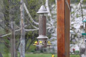 Birdfeeders with Weight Sensitive Perches