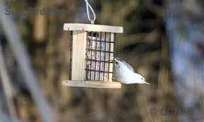 Suet Birdfeeder Birdfeeders
