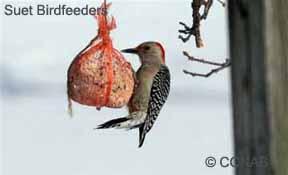 Suet Birdfeeder