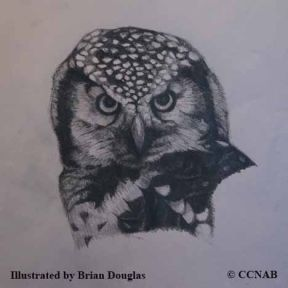 owls, pictures of owls