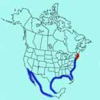 American Oystercatcher range