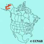 Arctic Warbler range