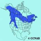 Canada Jay Range Map