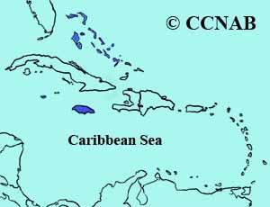Caribbean Dove range