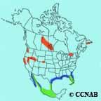 Caspian Tern range