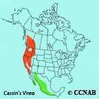 Cassin's