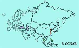 Chinese Egret range