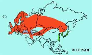 Common Redstart range
