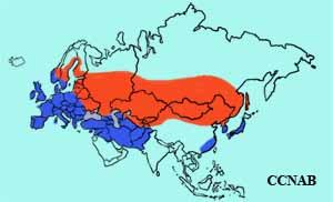 Eurasian Coot range