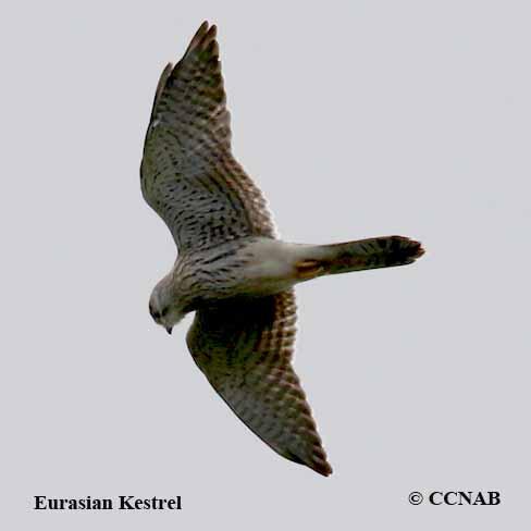 CCNAB