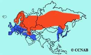 Eurasian Kestrel range