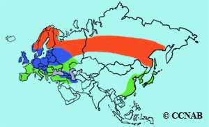 Eurasian Siskin range