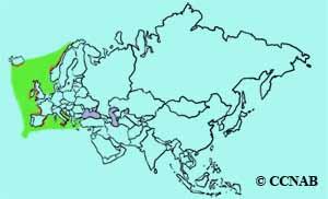 European Storm-Petrel range