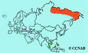 Far Eastern Curlew range