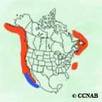 Leach's Storm-Petrel range