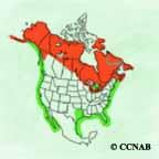 Red-breasted Merganser range
