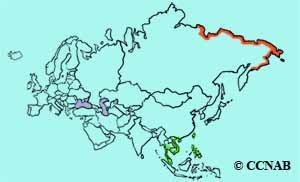Red-necked Stint range