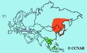 Siberian Blue Robin range