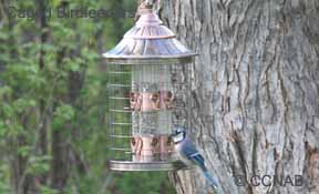 Caged Birdfeeders