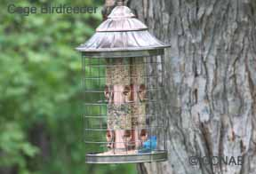 Caged Birdfeeder