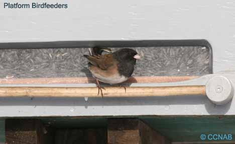 Platform Birdfeeders