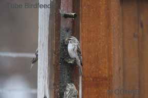 Tube Birdfeeder Birdfeeders
