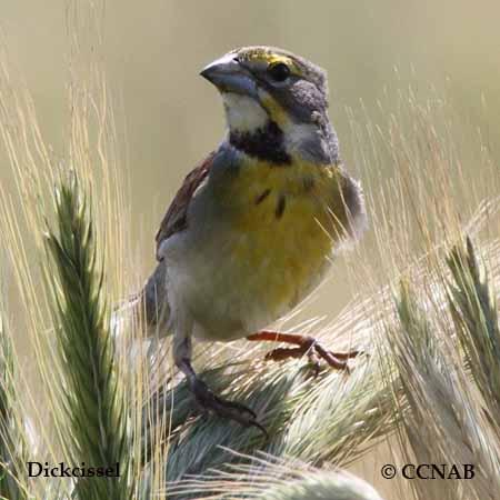 Bird Alpha Banding Codes