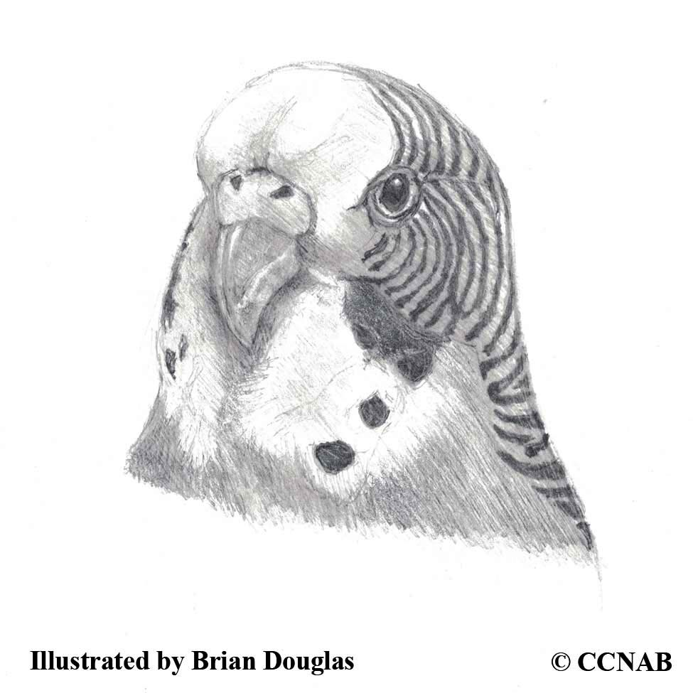 exotic birds in North America