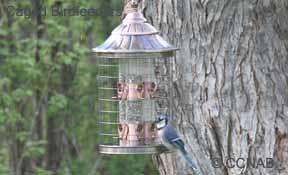 Caged Birdfeeders